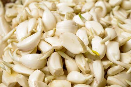 Seasoning garlic for cooking Stockfoto