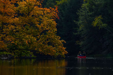 Family in canoe paddle around large orange colored tree on a stream, river, lake, pond, in Maine fall color.