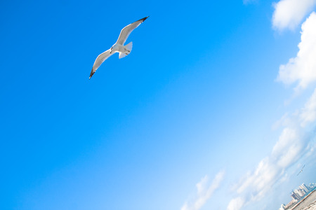 Bird flying out of city Stock Photo