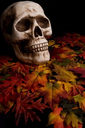 Haloween Skull