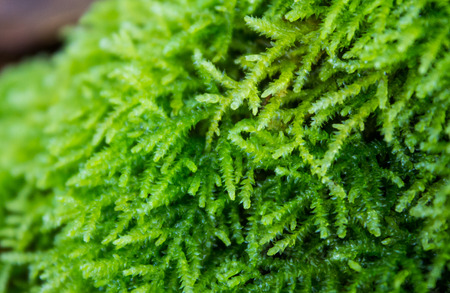 leafy: Green leafy moss close up Stock Photo