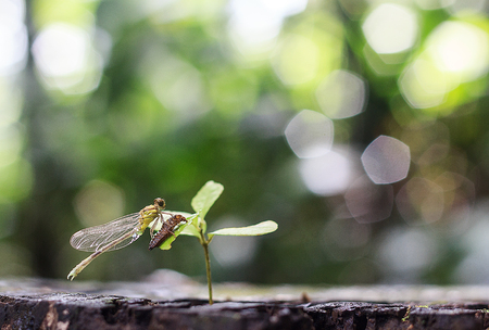 dragon fly: Dragon fly molt on sapling in morning