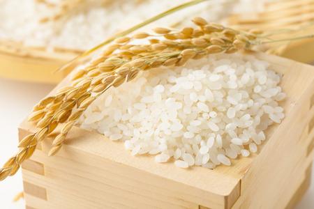 Japanese rice Reklamní fotografie - 46146830