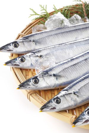 pacific: Pacific saury