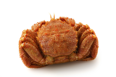 Hair crab Stock Photo