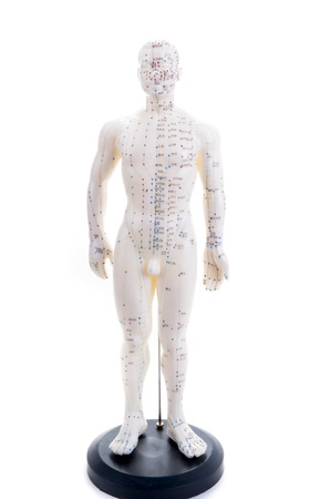 meridians: Learning acupuncture must be in such a acupuncture practice on the model Stock Photo