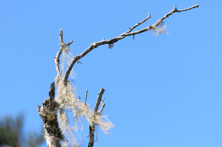 Dried branches under the background of blue sky