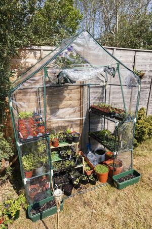 Greenhouse in garden. Summer time