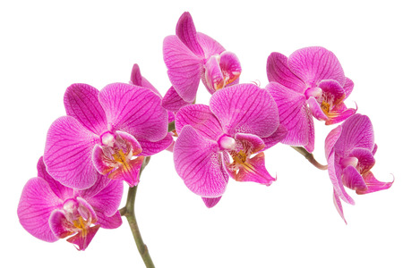 Orchid Flower Reklamní fotografie