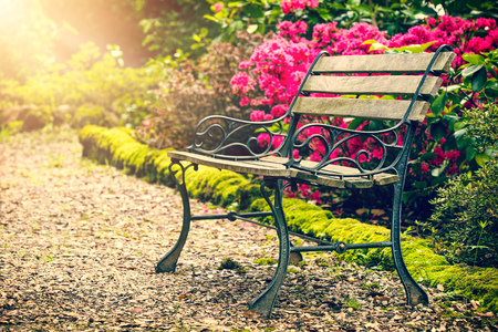 Bench in the colorful park