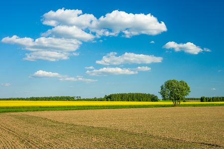 春の風景、砂利道