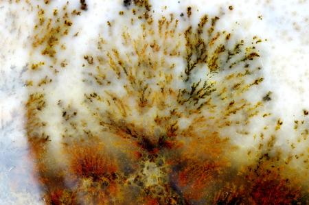 gemology: A cross section of the moss agate. Origin: Ural, Russia.
