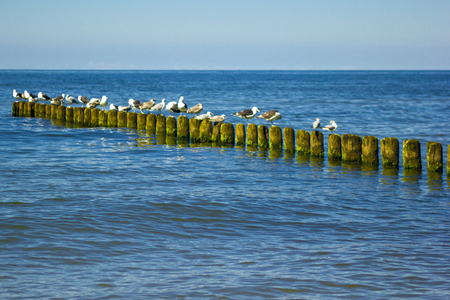 gulls at the seaside Editorial