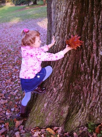 The girl climbs on the big tree