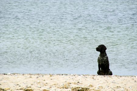 Black dog sits on a beach