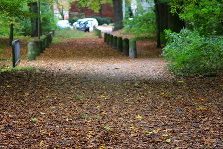 Path in the park, strewn with leaves Stock Photo