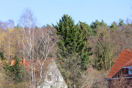 House in the forest among the trees