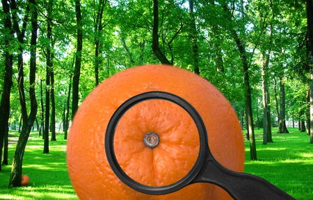 orange in a park.  to look, with magnifying glass