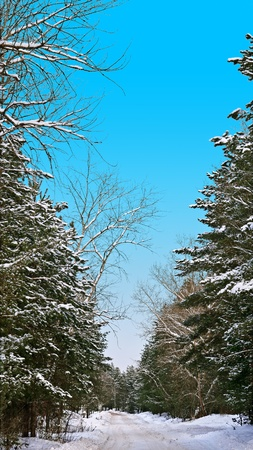 road under clear skies in the winter forest