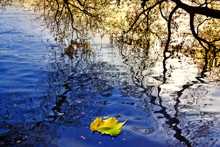 autumn leaf on the blue water of the reflections of tree branches Stock Photo
