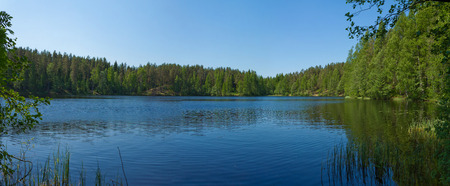 forest lake in summer, surrounded by trees