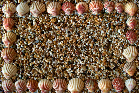 abstract background, frame with shells and small pebbles Stock Photo