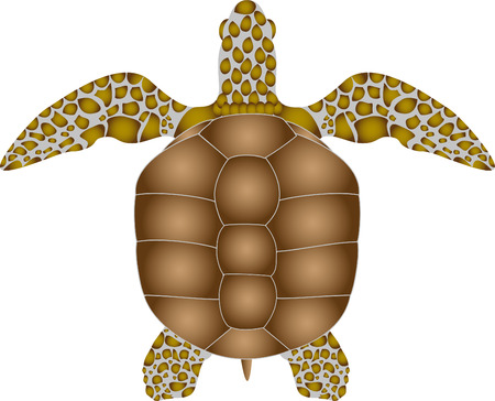 turtle on a white background. vector illustration. Stock Photo