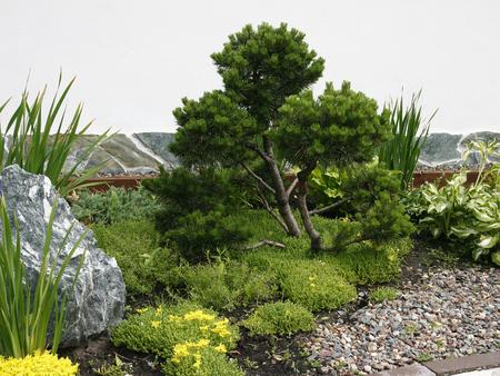bonsai tree: Bonsai tree in the Park.