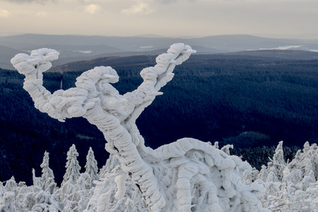 wintrily: ice, snow, hoar frost covering trees at Fichtelberg, Germany