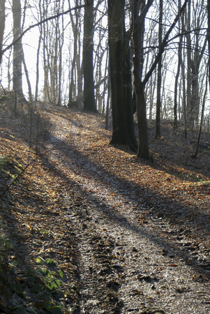 leer: Baumstämme, Wanderweg im Gegenlicht, Tree trunks, hiking in the backlight