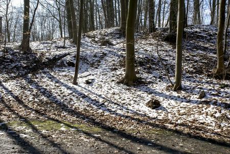 leer: Baumstämme, Reste von Schnee im Gegenlicht, Tree trunks, last snow in the backlight Stock Photo