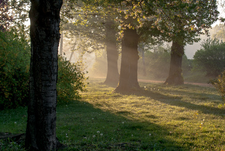 revive: grass, rope, flowering chestnut tree in early morning light, horizontal format Stock Photo