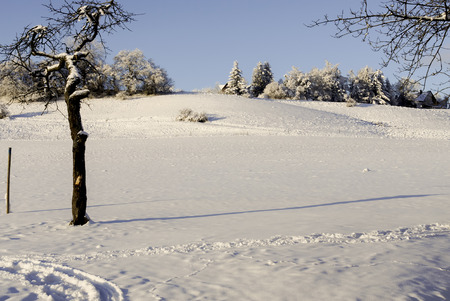 schneebedecktes Feld in der Sonne, im Hintergrund dunkler Forst, snow-covered field in the sun, dark forest in the background