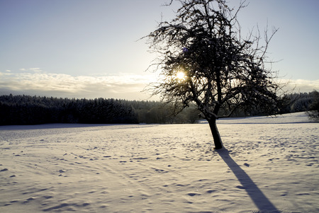 schneebedecktes Feld in der Sonne, im Hintergrund dunkler Forst, einzelner baum im Gegenlicht, snow-covered field in the sun, dark forest in the background, single tree against the light