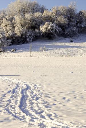 Hintergrund: schneebedecktes Feld in der Sonne, im Hintergrund Baumgruppe, Fußspuren, snow-covered field in the sun, group of trees in the background, footprints, against the light Stock Photo