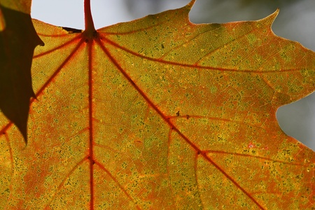 herbst: Blatt im Herbst - leaf in autumn Stock Photo