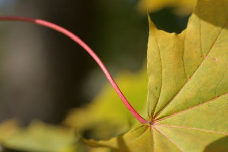 Blatt im Herbst - leaf in autumn Stock Photo