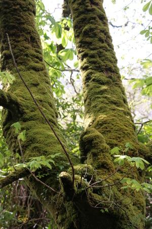 chlorophyll: tree