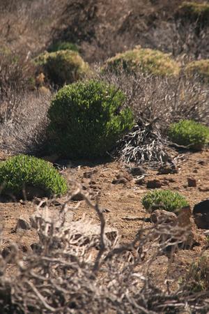 groundcover: fresh Grne bushes in dry barren landscape