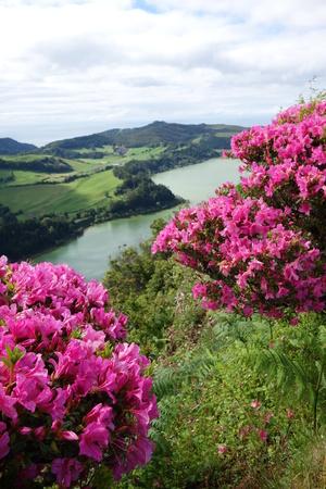 landscape flowers: Lagoa das Furnas Sao Miguel Azores - Portugal