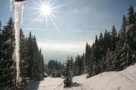sopel lodu: hanging icicle