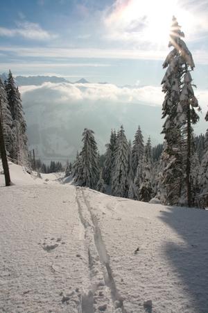 ski traces: landscape in winter