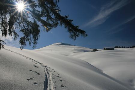 ski traces: sunshine in winter