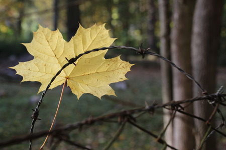 leaf in fence