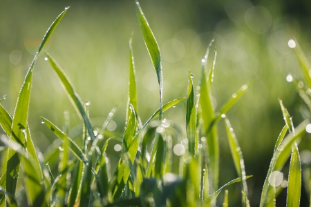 Dew on grass Stock Photo