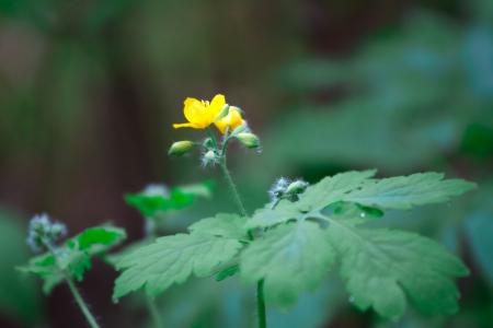Flower Stock Photo - 19122765