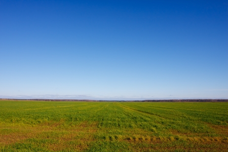 Summer landscape with a field of grass and blue sky