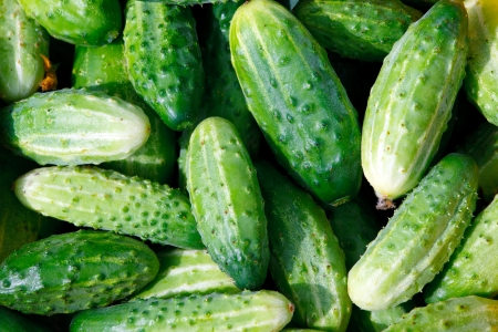 Texture of green cucumbers Stock Photo - 21074393