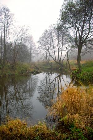 wilting: Marchitamiento de la naturaleza en oto�o
