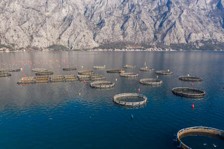 Aerial shoot of oysters, mussels and fish farming with traps and buoys in Boka-Kotor bay, Montenegro, the Adriatic coast in the springtime. Mountains in the background
